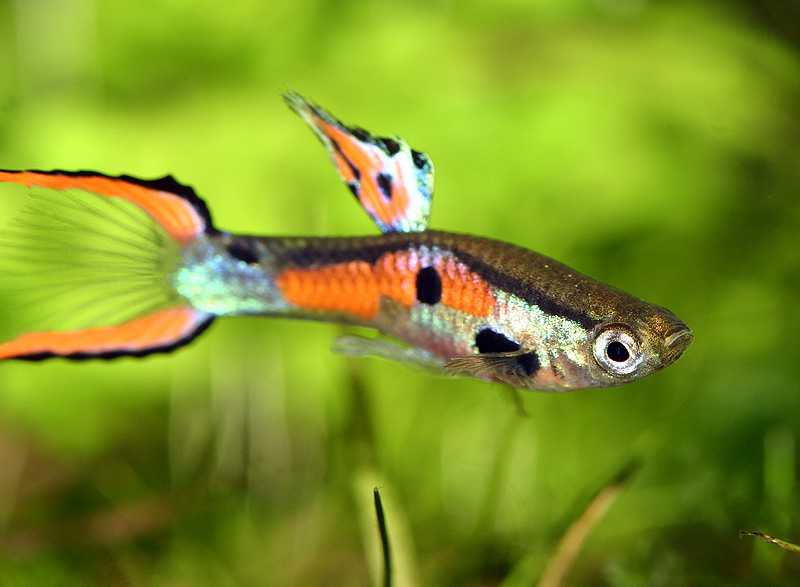 Exotic Freshwater Fish Supplier - Pet Food Cozy Project On